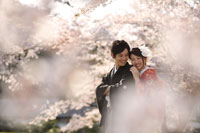 桜に囲まれて和装の桜ロケーションフォト