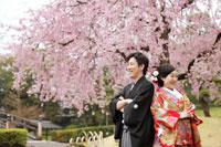 花田苑のしだれ桜で和装の桜ロケーションフォト