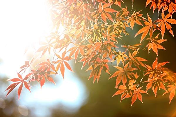 紅葉 前撮り
