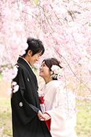 桜と和装前撮りロケーション
