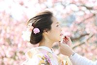 満開の桜でロケーション撮影