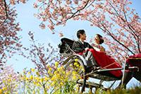 河津桜と人力車の風情溢れるロケーション撮影