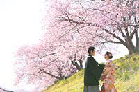 濃いピンクが特徴の河津桜