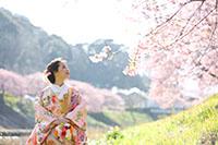 大自然に広がる河津桜とピンクの色打掛がとてもお似合い