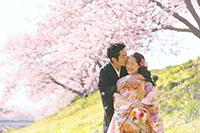 一足早く春の訪れを感じる河津桜ロケーション