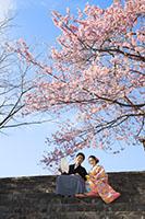 青空と河津桜のコラボレーションは特別なフォトウェディングに