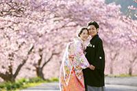 河津桜のトンネルが広がるロケーション撮影