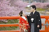 河津桜の並木を背景に和装でロケーション撮影