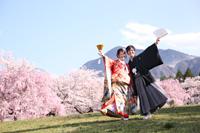 和装で桜ロケーション