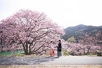河津桜ロケーションで思い出の結婚写真を