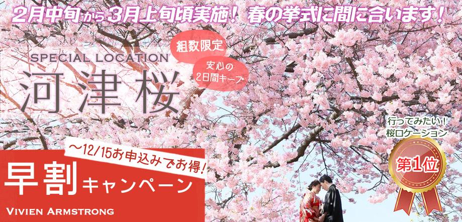 河津桜で前撮り