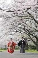 桜の木の下で手をつないで和装前撮りロケーション