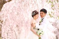 ウェディング姿で特別な桜ロケーションフォト