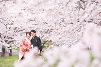満開の桜に囲まれたロケーションフォト
