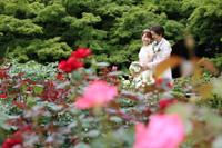 旧古河庭園のバラと幸せそうな新郎新婦様