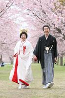 日本髪スタイルで桜ロケーション撮影をするご新婦様