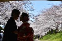 桜の咲く季節は和装でロケーション撮影