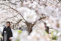 桜で埋もれてしまうくらいの満開の中でのロケーションフォト