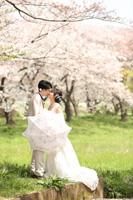 ウェディングドレスでドラマチックな桜ロケーションフォト