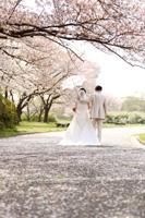 先まで続く桜の絨毯が素敵な演出に