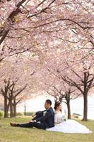 桜並木の芝生に腰掛け、画になるお二人