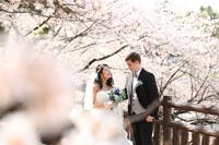 春の季節はドレスで桜ロケーションフォト