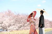 穏やかな風が吹く桜ロケーション日和