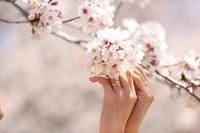 ひときわ輝く結婚指輪と一緒に思い出の桜ロケーション撮影