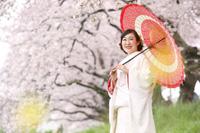 白無垢姿が新婦様の美しさを引き出す桜ロケーションフォト