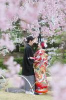 花田苑の垂れ桜でロケーションフォト