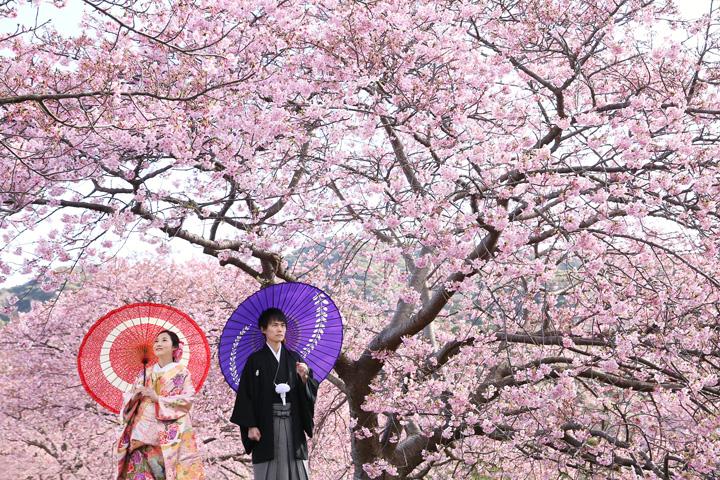 河津桜で和装前撮り