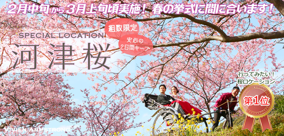 青空と河津桜の下、人力車で桜ロケーションフォト